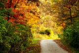 Rock Cut State Park, Illinois - Hiking Trail - Fall Colors