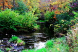 Rock Cut State Park, Illinois - Creek through the thicket