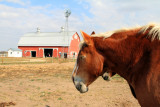 Prophetstown State Park, IN - Horse