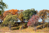 Prophetstown State Park, IN - Fall Colors