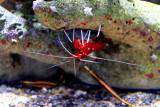 Shrimp, Monterey Bay Aquarium, CA