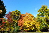 Deer Grove Forest Preserve, Palatine, IL - Fall colors
