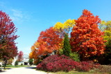 Cherrywood Drive, Palatine, IL - Fall colors