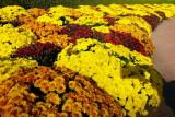 Chicago Botanic Garden - Fall blooms