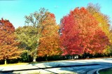 Fall Colors, Long Grove, IL