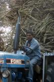 Tractor driver, Sugarcane load, Uttar Pradesh