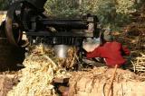 The sugarcane is crushed, Uttar Pradesh