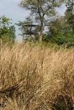 Machan, Rajaji National Park, Uttaranchal