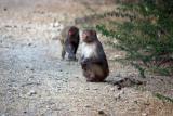 Monkey Business, Keoladeo National Park, India
