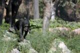 The Chimpanzee evolves, National Zoological Park, Delhi