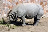 R is for Rhinocerous