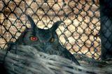 Owl, National Zoological Park, Delhi