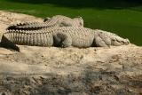 Then there were reptiles..., National Zoological Park, Delhi