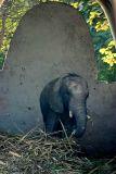 The baby Elephant, National Zoological Park, Delhi