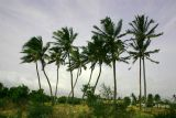 Blowing in the wind, Dharapuram, Tamil Nadu