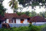Wild cows, Melarkode, Kerala