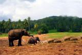 Elephant orphange in Pinnewela, Sri Lanka