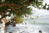 Natural diving board, Sri Lanka
