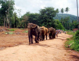 Sri Lanka - A land like no other - 2004