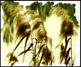 Painted Lakeside Grasses.jpg