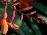 Cornish flower 72.jpg