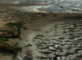 river rope.jpg