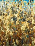 Lakeside-grasses-Spain.jpg