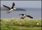 Landing at Inner Farne Island
