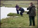 Phalarope photography at  Loch of Funzie - Fetlar