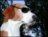 Dacke - Håkans cool dog...