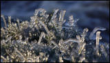 Icefingers of frozen grass near waterfall - Huseby