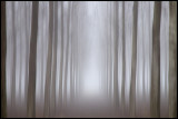 The gate of light - Fog in forrest near Sforzesca Italy