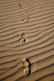 060309-169 Sandwalk w.jpg