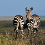 Wild Animals South Africa