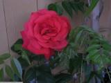 js57_IMG_3074.jpg