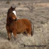 PiceanceBand-2247-foal-13Dec2010-web.jpg