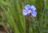 1822 Bee