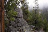 2045 Foggy Trees