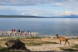 2162 West Thumb - Elk Watching