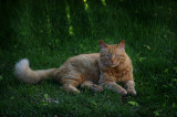 gingi - our late cat (R.I.P)