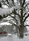 December 14th 2008 Snow