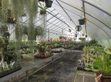 Orchid greenhouse ...