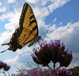Still as a butterfly