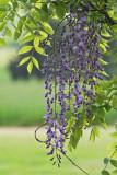 IMG_2288_ Purple