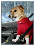 Ridin' In Her Car Seat!