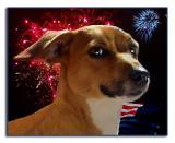 Patriotic Pup _ My Covergirl!