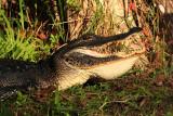 Day Three: Everglades National Park