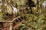 Mt. Irau