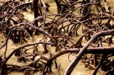 Kukup Island Mangrove Forest