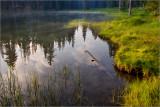 Reflections on Summit Lake